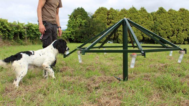 Crónicas de un Instructor – Cómo comportarse ante perro Detector de Hipoglucemias
